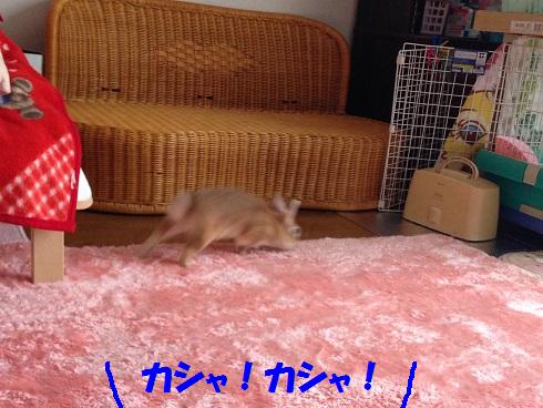 IMG_9324.へやんぽ