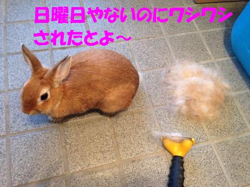 IMG_9505.ワシワシ