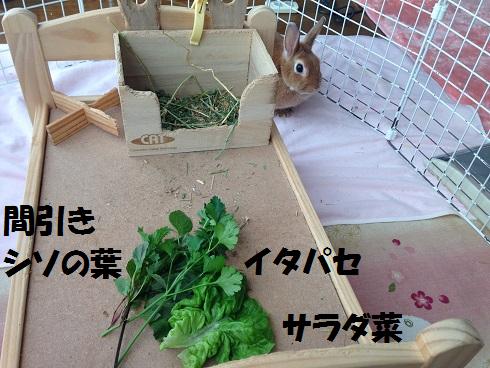 IMG_9488.自家製野菜