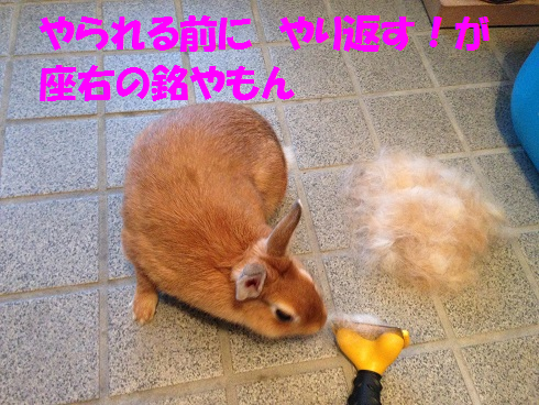 IMG_9508.ワシワシ