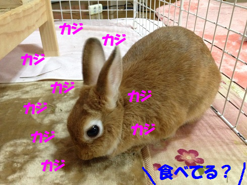 IMG_9300.ぶどう