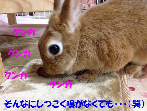IMG_9294.ぶどう