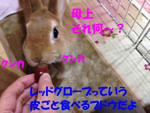 IMG_9292.ぶどう