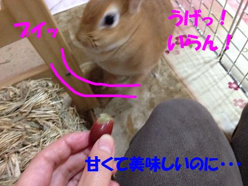 IMG_9291.ぶどう