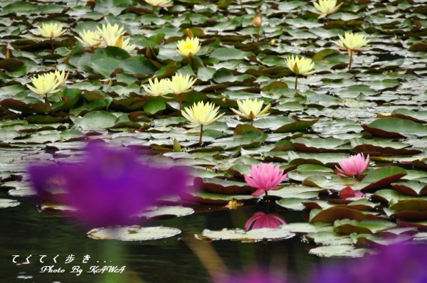 2トンボ自然公園15.05.31
