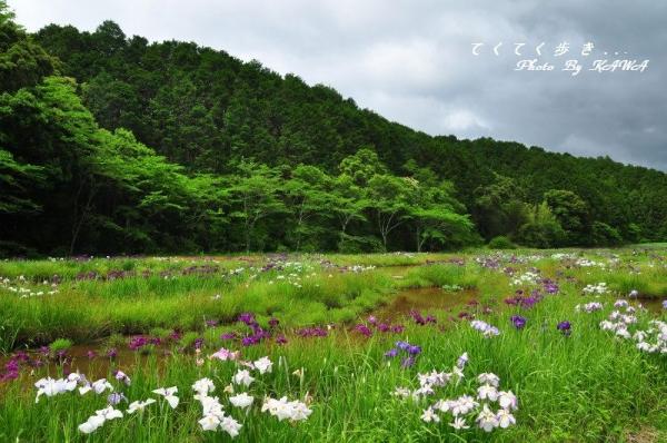 3トンボ自然公園15.05.31