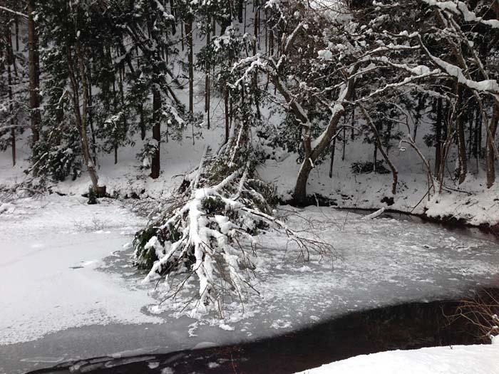2014 大雪 1