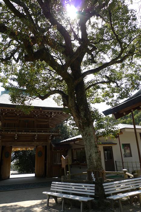 志賀海神社  福岡県  18
