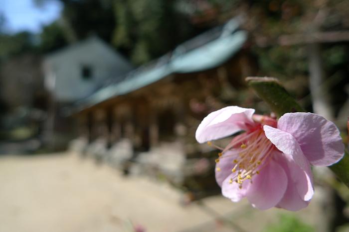 志賀海神社  福岡県  24