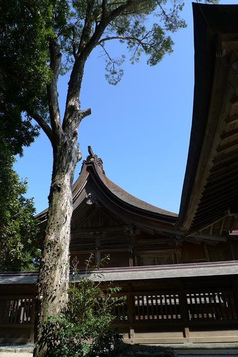 志賀海神社  福岡県  29
