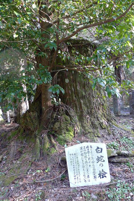 國造神社  熊本県  10