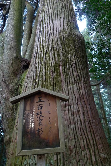幣立神宮  熊本県  22
