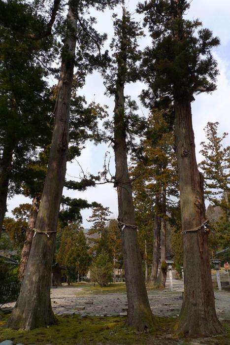 射水神社  富山県  3