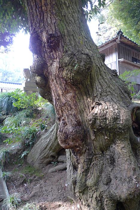 氣多神社  富山県  8