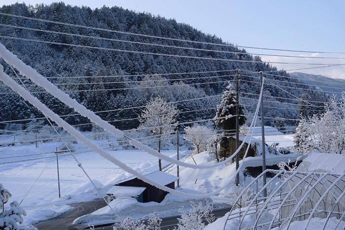 着雪 雪景色 2015  1