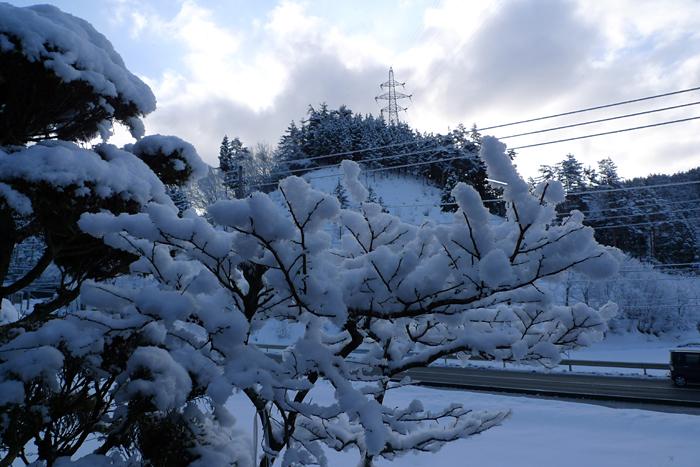 着雪 雪景色 2015  3