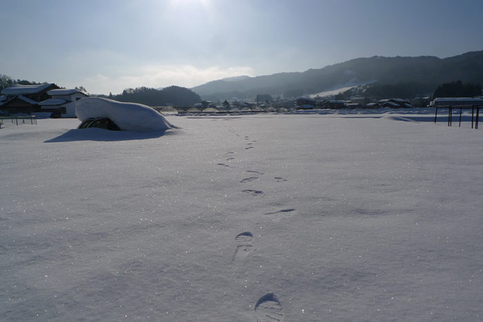 かってに乗る 2015 冬 1