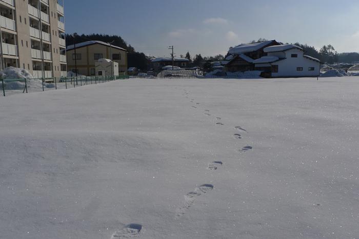 かってに乗る 2015 冬 2