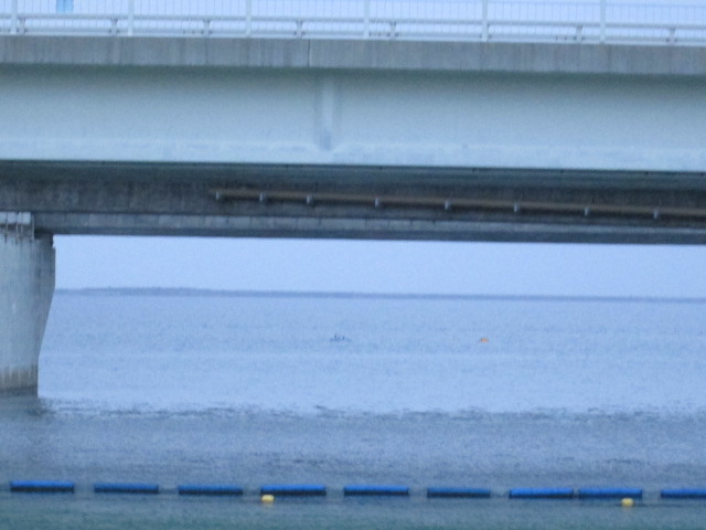 沖縄 069