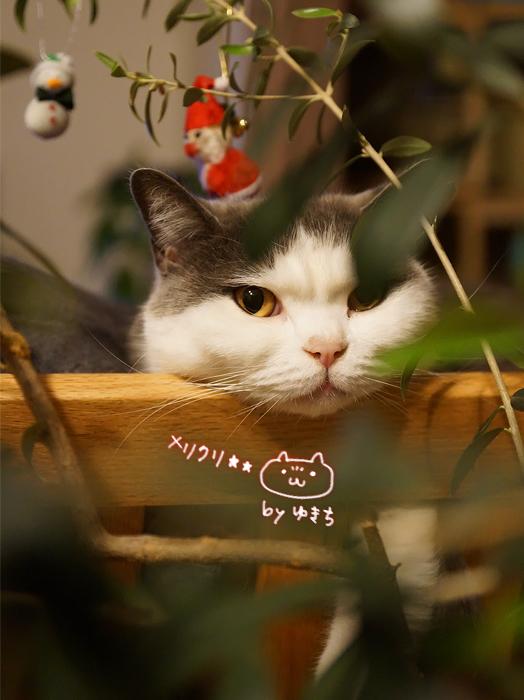 メリークリスマスゆきち