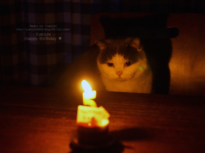 ゆきち 5歳の誕生日♥