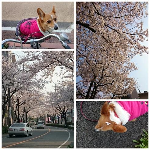 PicsArt_1427805174153.jpg