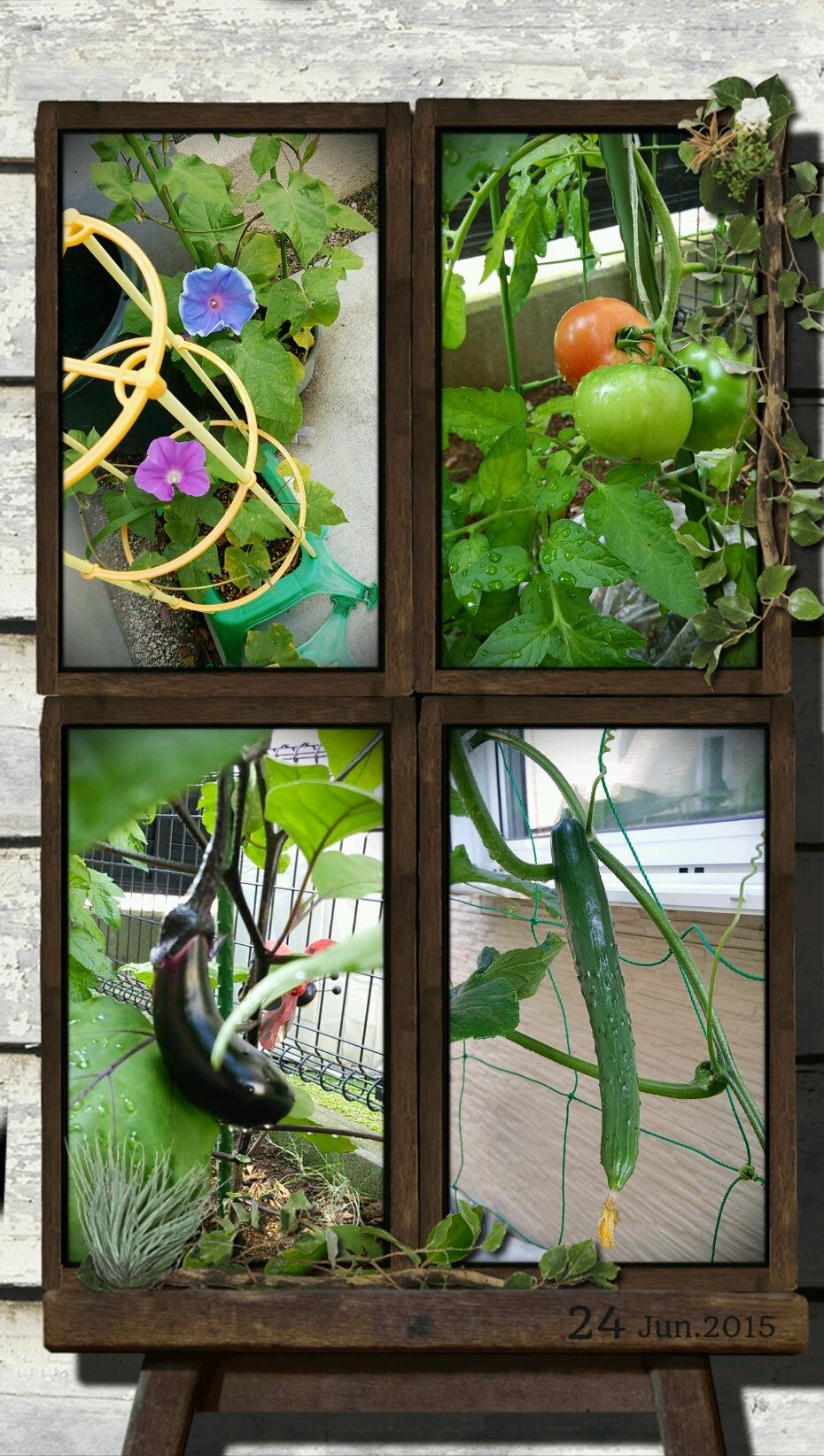 野菜0624