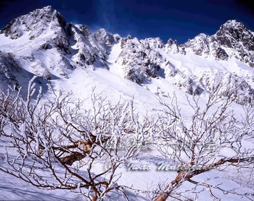 樹氷のダケカンバ