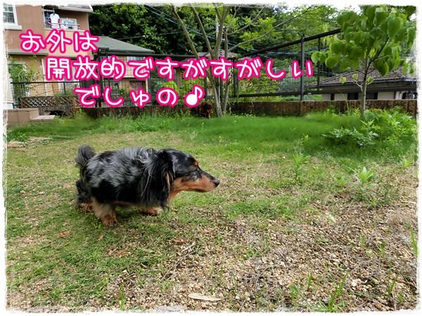 hausu3.jpg