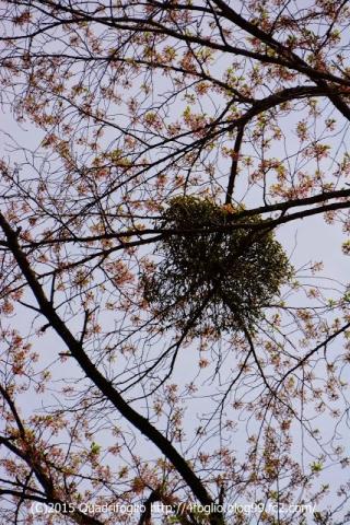 2015 春 山梨県勝沼