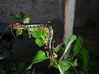 害虫の季節がやって来ました!