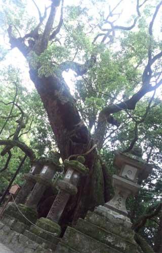 20150523_kasugataisya_016.jpg