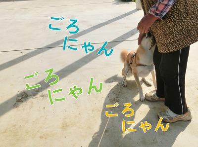 s-cat141215-CIMG5088