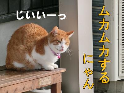 s-cat141215-CIMG5107