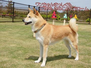 s-nagisa150130-CIMG8876