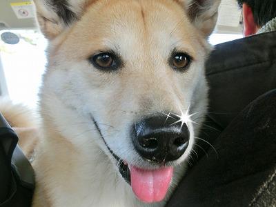 s-dogrun150223-CIMG6351
