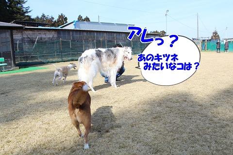 s-nakayoku150301-IMG_5815