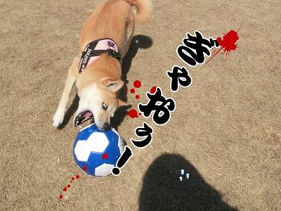 s-2dogrun150410-1-CIMG7579