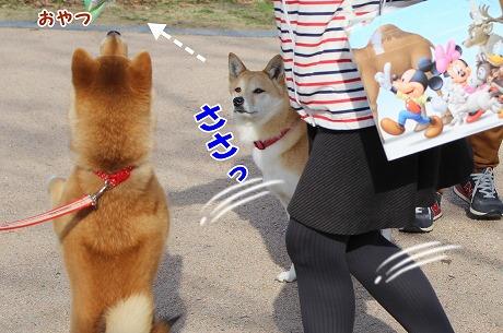 s-1oyatsu150413-IMG_6350