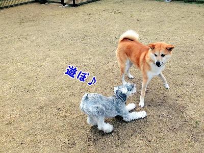 s-dogrun150425-CIMG7924