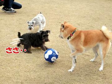 s-dogrun10425-CIMG7913