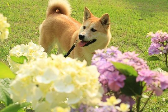 s-azisaiIMG_8504.jpg