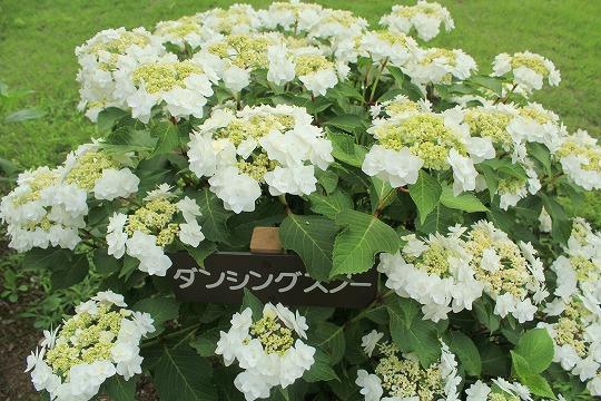 s-azisaiIMG_8528.jpg