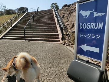 s-dogrunCIMG7544.jpg