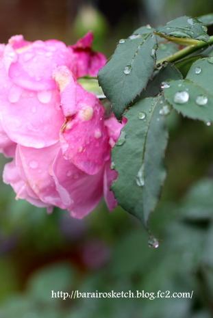 雨のミサト2