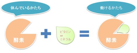 酵素とミネラルの図2