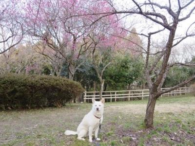 梅が咲いたね