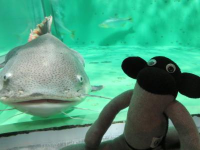 寄って来る魚
