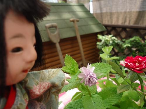 yukikochan-itumono-kamikazari4.jpg