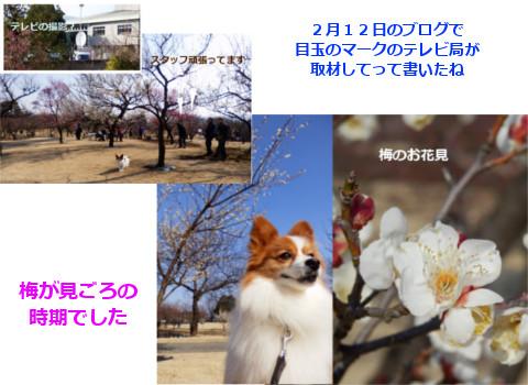 20150526.jpg